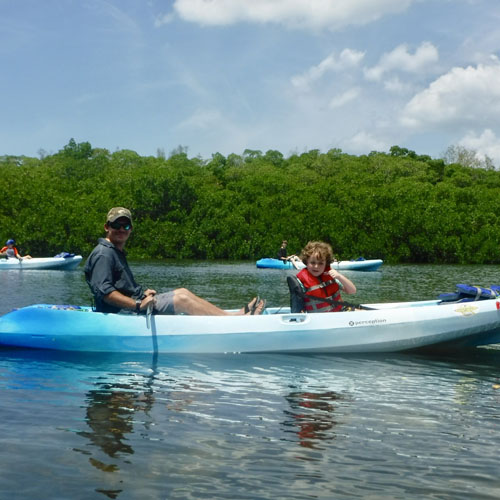 Kayaking SRQ   Adventure along Sarasota's Mangroves